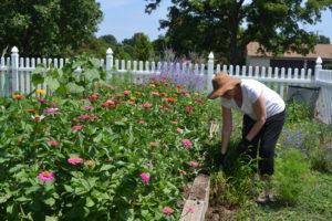 Associate Joan Sweeney tends her flower garden